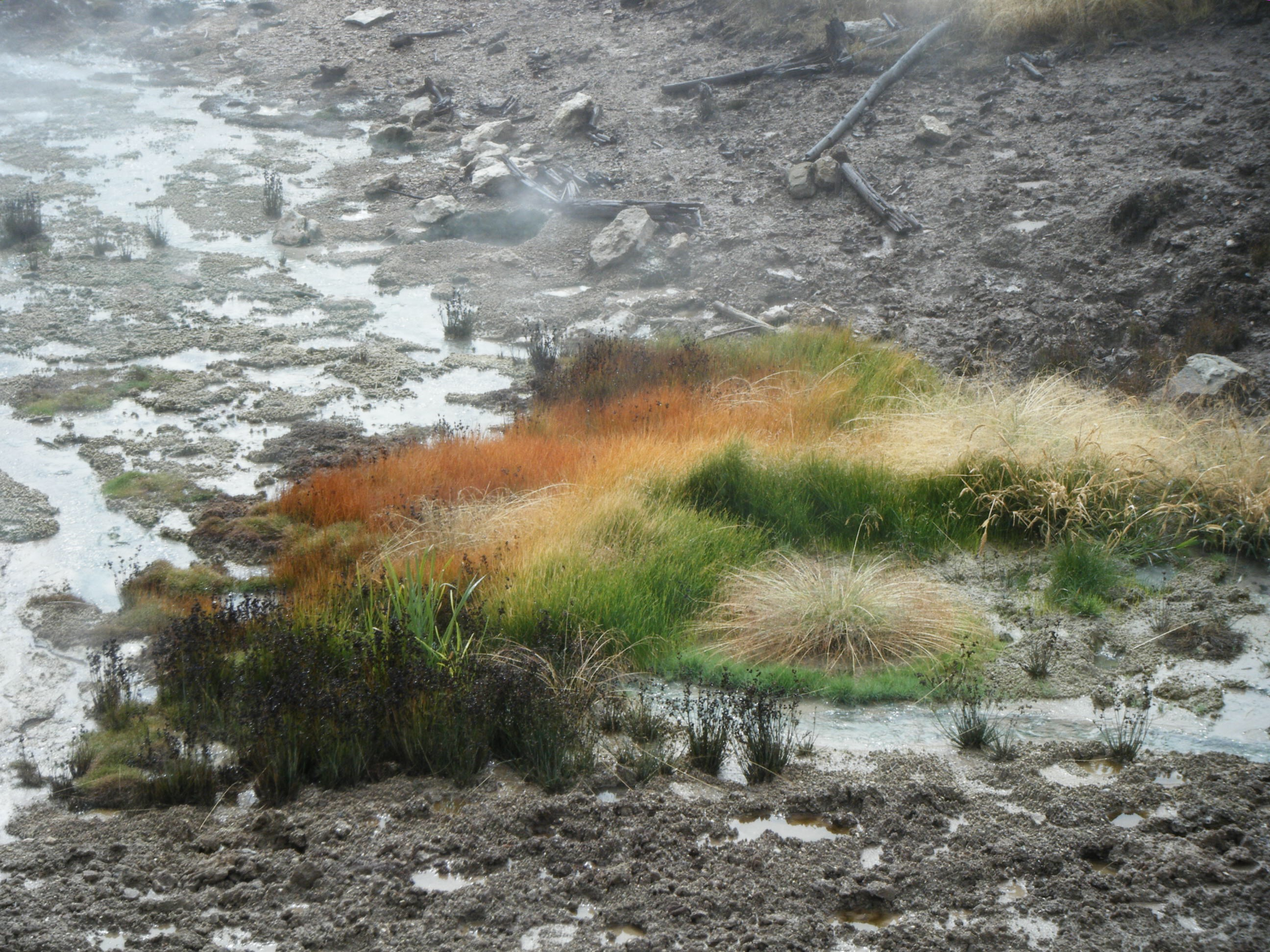 Grasses in late September at Mud Volcano