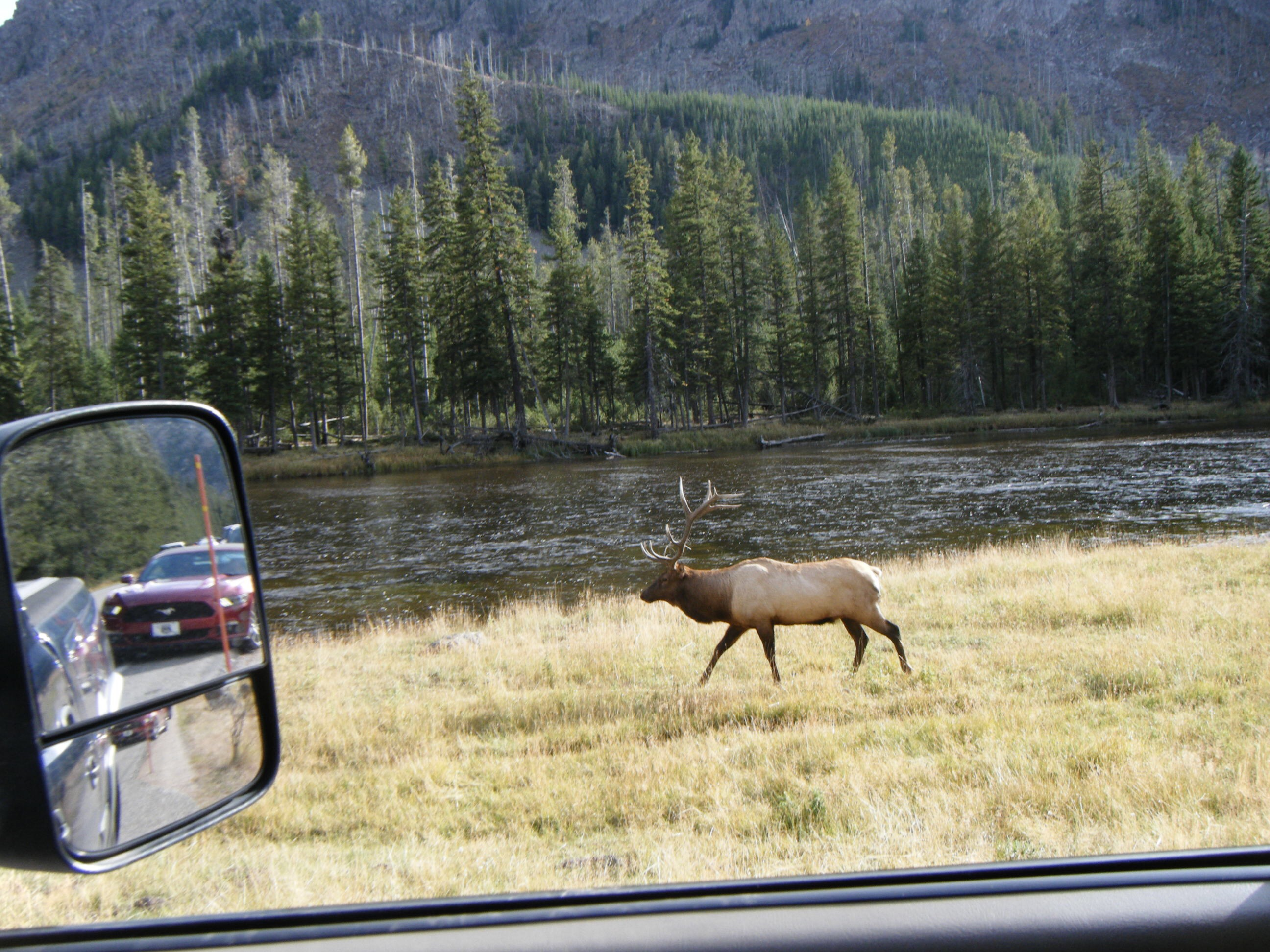 I was on my way back to camp from West Yellowstone.